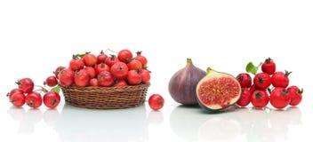 Fikonträd, äpplen och hagtornbär på en vit bakgrund Fotografering för Bildbyråer