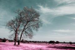 Fikonträd konstnärliga färger av naturen Arkivfoto