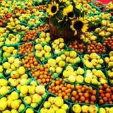 Fikonträd & tomater Arkivfoton