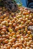 Fikonträdet bär frukt i den Marrakesh marknaden i Marocko Arkivfoto