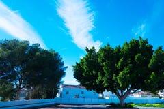 Fikus nära huset Nerja spain Arkivfoto