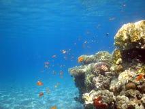 Filón coralino Imágenes de archivo libres de regalías