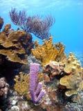 Filón coralino Fotos de archivo libres de regalías