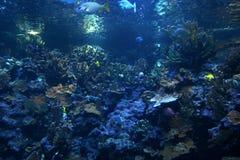 Filón coralino Fotografía de archivo libre de regalías