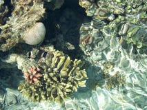 Filón coralino 2 Imagen de archivo libre de regalías