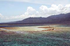 Filón coralino Fotografía de archivo