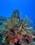 Filón coralino Fotos de archivo