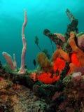 Filón coralino foto de archivo libre de regalías