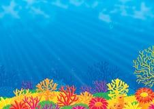 Filón coralino Imagen de archivo libre de regalías