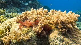 Filón coralino colorido almacen de metraje de vídeo
