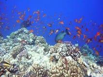 Filón coralino colorido metrajes