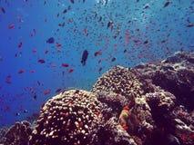 Filón coralino colorido almacen de video