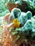Filón coralino colorido Foto de archivo libre de regalías