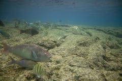 Filón coralino con los pescados Imagen de archivo libre de regalías