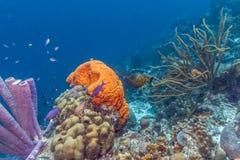 Filón coralino del Caribe Imagen de archivo libre de regalías