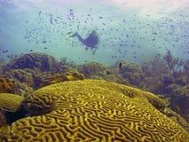 Filón coralino del Caribe Imagenes de archivo