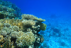 Filón coralino del Mar Rojo Imagen de archivo libre de regalías