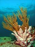 Filón coralino en 15 pies Imágenes de archivo libres de regalías