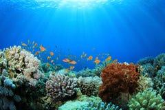 Filón coralino en el mar Fotografía de archivo