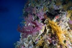 Filón coralino exótico fotos de archivo