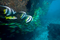 Filón coralino subacuático imagen de archivo libre de regalías