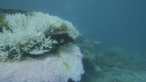 Filón coralino subacuático metrajes
