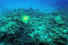 Filón coralino subacuático Foto de archivo libre de regalías