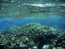 Filón coralino subacuático con la superficie del agua Imágenes de archivo libres de regalías