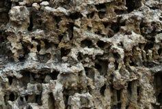 Filón coralino tropical Imágenes de archivo libres de regalías