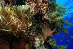 Filón coralino tropical sano imagen de archivo