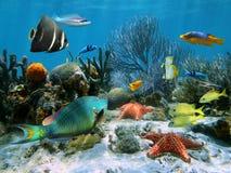 Filón coralino y estrellas de mar Imagen de archivo libre de regalías
