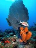 Filón coralino y pescados   imagen de archivo libre de regalías