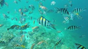 Filón coralino y pescados tropicales almacen de metraje de vídeo