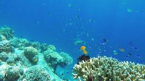 Filón coralino y pescados tropicales metrajes