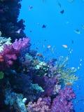 Filón coralino y pescados tropicales Foto de archivo libre de regalías