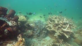 Filón coralino y pescados tropicales Bali, Indonesia almacen de metraje de vídeo
