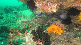 Filón coralino y pescados tropicales Bali, Indonesia almacen de video