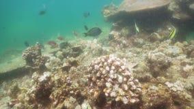 Filón coralino y pescados tropicales Bali, Indonesia metrajes