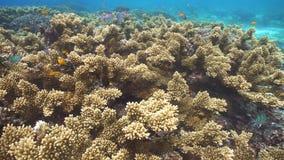 Filón coralino y pescados tropicales filipinas almacen de metraje de vídeo