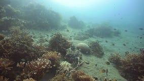 Filón coralino y pescados tropicales filipinas metrajes