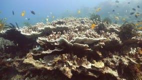 Filón coralino y pescados tropicales filipinas almacen de video