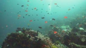 Filón coralino y pescados tropicales Filipinas, Mindoro almacen de metraje de vídeo
