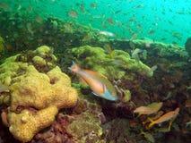 Filón coralino y pez papagayo Imágenes de archivo libres de regalías