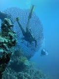 Filón coralino y zambullidores de equipo de submarinismo Fotografía de archivo libre de regalías