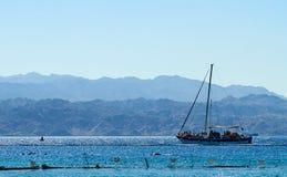 Filón del delfín en el Mar Rojo fotografía de archivo
