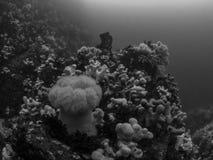 Filón imponente de la agua fría Salto, Northumberland imagen de archivo libre de regalías