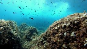 Filón subacuático del mar Mediterráneo del paisaje - buceo con escafandra en Majorca almacen de metraje de vídeo
