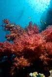 Filón tropical colorido y corales suaves florales Foto de archivo libre de regalías