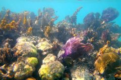 Filón tropical del Caribe en Riviera maya Fotos de archivo libres de regalías