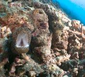 Filón y coral Maldivas Foto de archivo libre de regalías